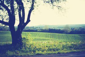 field trees landscape