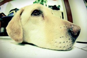 fisheye lens animals dog