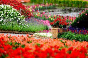 flowers baskets flowerpot depth of field colorful red flowers garden