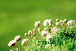 flowers macro grass simple background plants green background