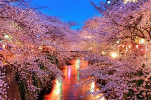 flowers photography lights landscape plants water trees river cherry blossom