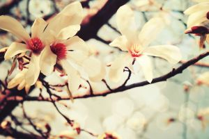 flowers plants white flowers branch