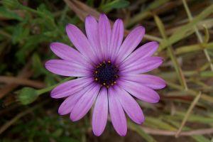 flowers purple flowers nature