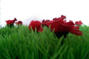 flowers red grass plants