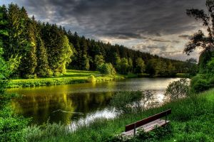 forest bench lake nature