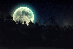 forest fantasy art night moon space stars