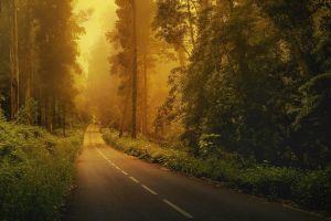 forest green car natural light landscape road nature trees mist