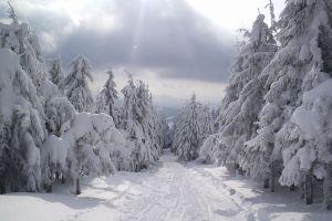 forest landscape nature snow winter