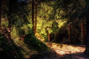 forest landscape nature
