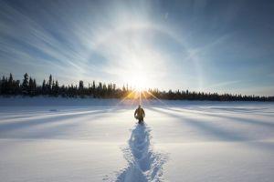 forest landscape winter snow lens flare