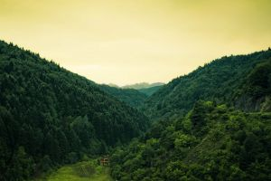 forest nature cabin landscape