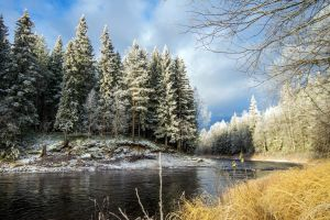 forest river winter nature snow landscape trees