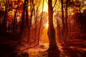 forest sunlight nature trees
