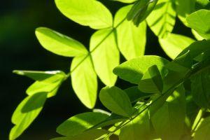 fresh nature green trees