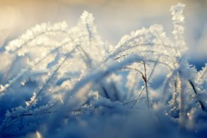 frost ice plants grass nature