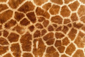 fur animal print giraffes