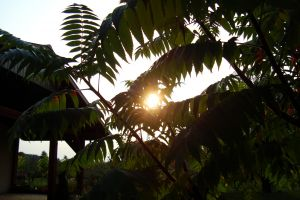 garden dark plants sun leaves sunlight