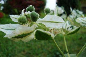 garden nature plants