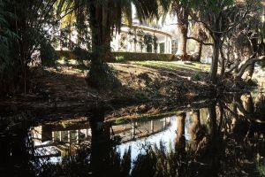 garden trees water plants