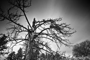 gloomy trees dead trees monochrome nature