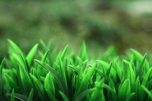 grass blurred macro nature plants