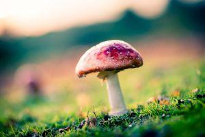 grass blurred plants mushroom nature