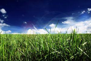 grass clouds plants blue digital art sky