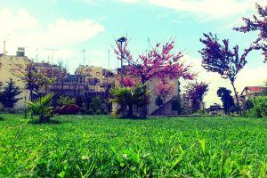 grass greece building trees thessaloniki stavroupoli