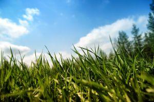 grass nature macro macro