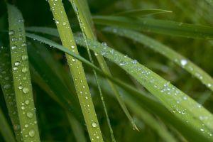 grass plants green macro nature water drops