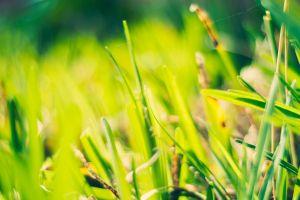grass plants green
