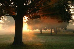 grass trees sunlight sunset