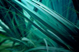 green plants turquoise nature macro cyan grass