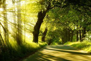 green sun rays trees landscape nature sunlight road