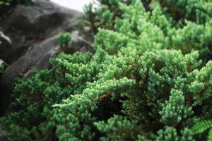 green trees plants depth of field