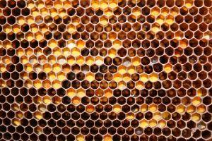 hexagon beehive patterns texture