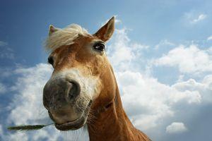 horse animals clouds