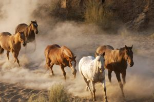 horse animals sand