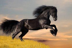 horse anime animals anime