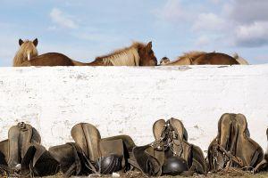 horse saddles animals