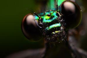 insect animals macro