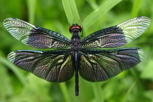 insect animals nature dragonflies