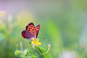 insect butterfly flowers animals