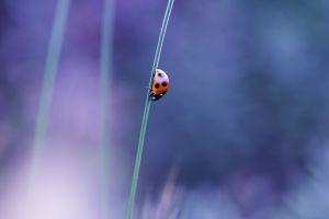 insect ladybugs nature macro