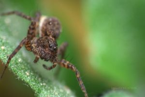 insect macro animals spider nature