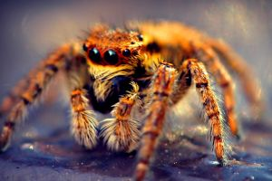 insect spider nature animals macro