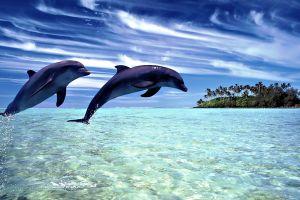 island digital art animals sea clouds dolphin