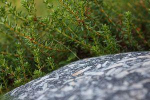 karelia landscape stones