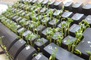 keyboards computer nature plants