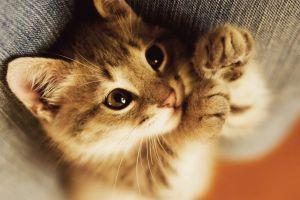 kittens cats baby animals
